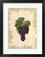 Framed Antique Grapes - Aspiran
