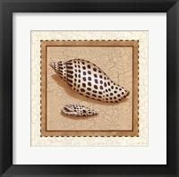 Framed Seashells IV