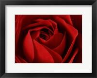Framed L'Important, c'est la Rose