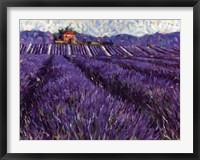 Framed Lavender Fields I