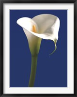 Calla on Blue I Framed Print