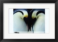 Framed March of the Penguins Love