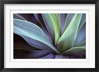 Framed Agave Cactus