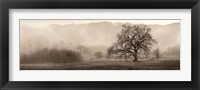 Framed Meadow Oak Tree
