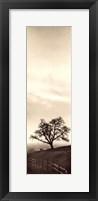 Framed Sentinel Oak Tree