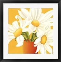 Sunny Daisies Framed Print