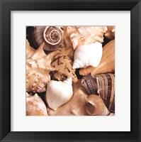 Framed Beachside Shells