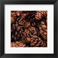 Framed Cone Harvest