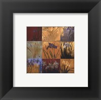 Iris Nine Patch II Framed Print