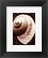 Sea Gallery II Framed Print
