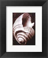 Sea Gallery IV Framed Print
