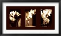 Framed Exotic Blooms
