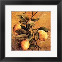 Lemon Branch Framed Print