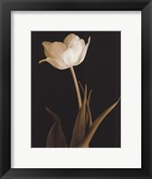 Splendid Beauty Framed Print