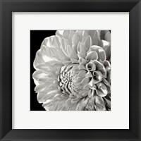 Sunburst II Framed Print