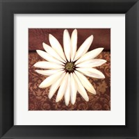 Framed White Daisy