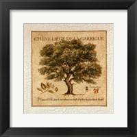 Framed Chene Liege De La Garrigue