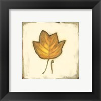 Framed Fall Color IV