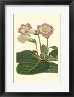 Framed Gloxinia Garden II