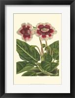 Framed Gloxinia Garden III