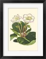 Framed Gloxinia Garden IV