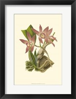 Framed Blushing Orchids I