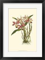 Framed Blushing Orchids II