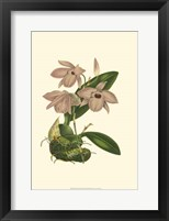 Framed Blushing Orchids III
