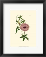 Framed Morning Glory I