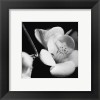 Framed Quince Blossoms V