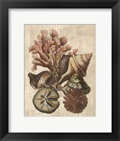 Framed Crackled Shell and Coral Collection on Cream I