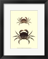 Framed Antique Crab I