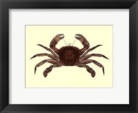 Framed Antique Crab II