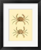 Framed Antique Crab III