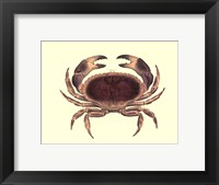 Framed Antique Crab IV