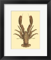 Framed Antique Lobster II