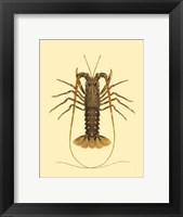 Framed Antique Lobster IV