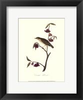 Framed Audubon's Thrush