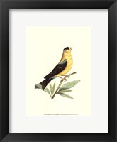 Framed American Finch