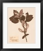 Pressed Flower Study I Framed Print
