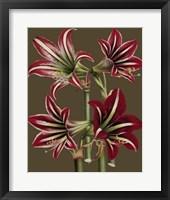 Framed Lush Amaryllis I