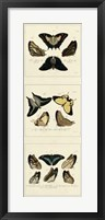 Antique Butterfly Panel I Framed Print