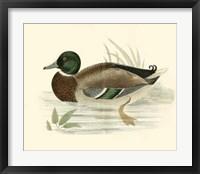 Framed Ducks I