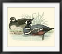 Framed Ducks IV