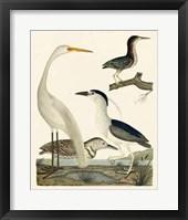 Framed Heron Family II