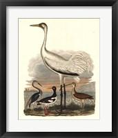 Framed Heron Family III