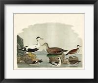 Framed Duck Family I