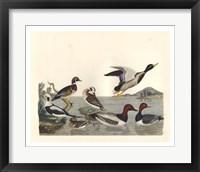 Framed Duck Family II
