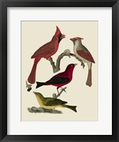 Framed Bird Family IV