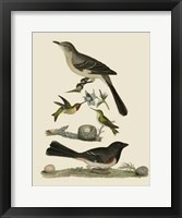 Framed Bird Family V